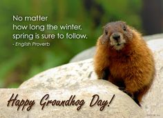 Groundhog Day Wishes for Friends Wishes For Friends, Day Wishes, 2016 Wishes, Days And Months, Months In A Year, Happy Groundhog Day, Spring Quotes, Spring Meme, Spring Awakening