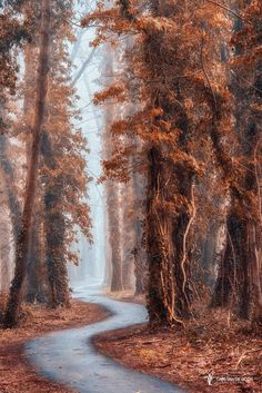 "Path without a name - <a href=""https://instagram.com/larsvandegoor/"">Follow me on Instagram</a> <a href=""http://larsvandegoor.com/"">LARSVANDEGOOR.COM</a>"