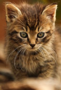 have to ask my freind Justina if her cat had any kittens when I start the club because we will learn about cats the first day