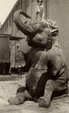 circus Hagenbeck 1912,olifant met hond | Flickr – Compartilhamento de fotos!