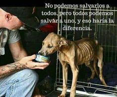 Adopt a pet Amor Animal, Mundo Animal, Animals And Pets, Baby Animals, Cute Animals, Stop Animal Cruelty, Family Dogs, Animal Rights, Beautiful Dogs