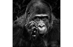 Memorias de un primate, por Robert Sapolsky   FronteraD (Foto: Isabel Muñoz)