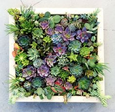 A vertical wall garden comprised of succulents is both easy to create and care for. (Source: livingwallart) Also on Yahoo Makers: