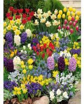Jardinerie en ligne Willemse : achat/vente de plantes pour le jardin & le jardinage
