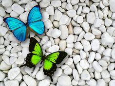 Butterflies on pebble - (#119917) - High Quality and Resolution ...