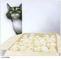 Gallery.ru / Фото #14 - Стахеев Владимир. Забавные коты - ninmix