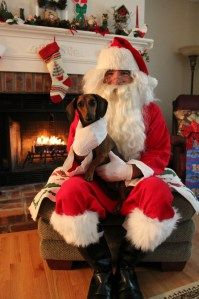 Shermie the dachshund with Santa.