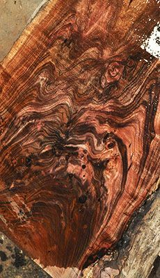 Natural edged slabs with amazing color and grain- Tasmanian Blackwood