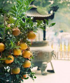 La Mandarina La mandarina es una fruta cítrica y jugosa también conocida como naranja mandarina. El nombre científico de esta planta tropical y sub-tropical es Citrus reticulate. Las mandarinas son originarias de China, donde se les considera un símbolo de buena suerte, por lo que cobran un significado sagrado durante la celebración del año nuevo chino.