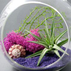 decoracao com air plants - Google Search