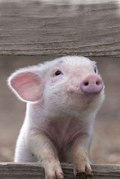 * * IT'S NO GOOD RUNNING A PIG FARM BADLY WHILE SAYING YOU WERE MEANT FOR SOMETHING ELSE. BY THAT TIME, PIGS WILL BE YOUR STYLE. ~Quentin Crisp