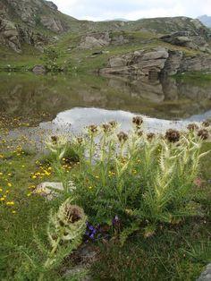 Colle del Nivolet - Parco Nazionale del Gran Paradiso http://lefotodiluisella.blogspot.it/