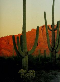 Late Night Randomness (25 Photos) - Suburban Men Desert Dream, Desert Life, Fallout New Vegas, Desert Aesthetic, Cacti And Succulents, The Great Outdoors, Nature Photography, Beautiful Places, Scenery