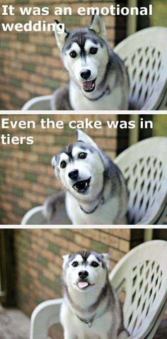 funny puns pick up lines ; funny puns for adults ; funny puns for boyfriend ; Funny Dog Jokes, Puns Jokes, Funny Jokes To Tell, Dad Jokes, Dog Memes, Funny Memes, Funny Quotes, Memes Humor, Puns Hilarious