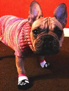 Dog sweater-pink dog sweater/hand knit dog/dog harness/pink puppy coat/pug coat/dog clothing/chihuahua sweater/tea cup dog/french bulldog - pinned by pin4etsy.com