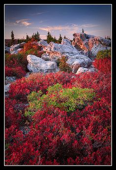 autumn, Turtle Rock, Dolly Sods Wilderness, West Virginia.