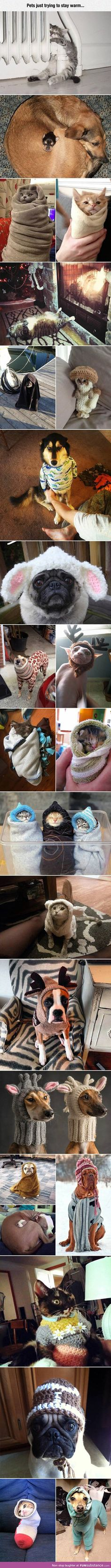 Pets trying their best to stay warm