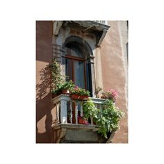 Flowers on Villa Balcony, Venice, Italy Photographic Wall Art Print ($40) ❤ liked on Polyvore featuring home, home decor, wall art, photographic wall art, flower stem, flower home decor, flower wall art and photography wall art