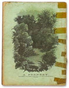 catalogue of ferns // 1884