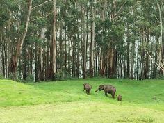The picture from dream hill station in South India - Mattupetty, Munnar Munnar, Hill Station, South India, Best Budget, 5 Star Hotels, Hotels And Resorts, Great Rooms, Eco Friendly, The Incredibles