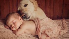 Dog milk for babies can be given in case of an emergency, but should generally be avoided. Here's what you should know about dog's milk beforehand, however. Newborn And Dog, Baby Dogs, Baby Baby, Bad Dog Breath, Dog Milk, Adoption, Pets 3, Dogs And Kids, Best Dog Breeds