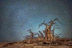 Sustentabilidade | Fura-bolha : As árvores  do mundo...