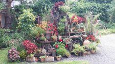 Meine Sommerblumen mit der Rost- Deko, Mitte August 2020. Plants, Summer Flowers, Plant, Planting, Planets