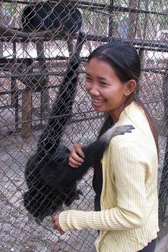 Betelnut Tours - Phnom Penh - Tamao Wildlife rescue centre. Good day out