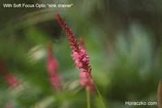 Soft Focus Optic by Eva Piat