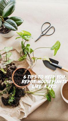 Low Light Plants, Sun Plants, Summer Plants, Potted Plants, Indoor Plants, Terrace Garden, Herb Garden, Indoor Garden, House Plants Decor