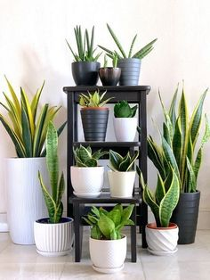 Easy and Fun Tips for Designing Your Indoor Garden living ro.- Easy and Fun Tips for Designing Your Indoor Garden living room Easy and Fun Tips for Designing Your Indoor Garden living room - Plantas Indoor, Sansevieria Plant, Lovely Apartments, Apartment Plants, Apartment Gardening, Decoration Plante, Best Indoor Plants, Outdoor Plants, Indoor Plant Decor