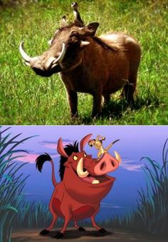 112 best timão e pumba images on pinterest the lion king disney