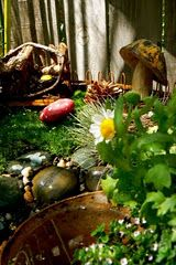 This is a beautiful blog. Tutorial on how to make a fairy garden. Enjoy!