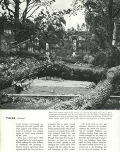 Pt. 2 of recap of 1962 Columbus Day Storm (Typhoon Frieda) destroyed most of the trees on campus, damaged buildings, and killed two students. From the 1963 Oregana (University of Oregon yearbook). www.CampusAttic.com Evergreen State, Columbus Day, University Of Oregon, Historical Pictures, Portland Oregon, Fishing Boats, Washington State, Art Images, City Photo