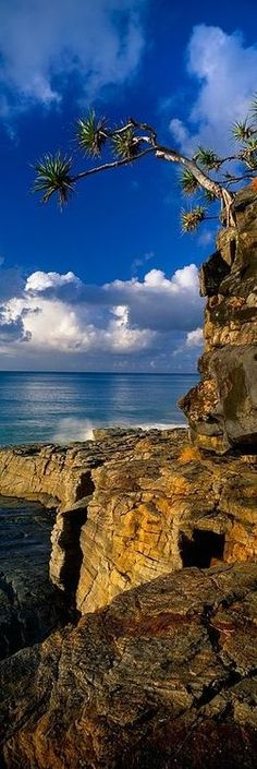 Noosa National Park. Noosa National Park is a national park in Queensland, Australia, 121 km north of Brisbane. It is situated near Noosa Heads between the Pacific Ocean and the Sunshine Coasts's northern area of urban development and extends southwards, past Lake Weyba to Coolum