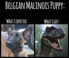 Accurate representation! #Maligator