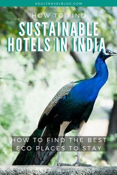 How to Find Sustainable Hotels in India - with Coral Road Travel Tags, Climate Change Effects, Responsible Travel, Sustainable Tourism, Tips & Tricks, India Travel, Beautiful Beaches, Family Travel, Sustainability