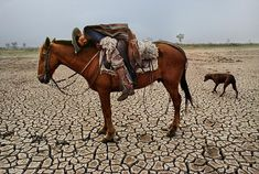 Paraguay - Photo : Steve McCurry