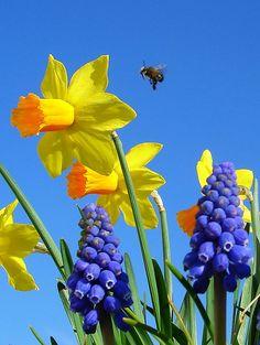 Messenger of Spring by langkawi, via Flickr