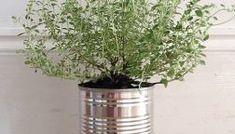 Как вырастить тимьян из семян в горшке Glass Vase, Plants, Home Decor, Decoration Home, Room Decor, Plant, Interior Design, Home Interiors, Planting