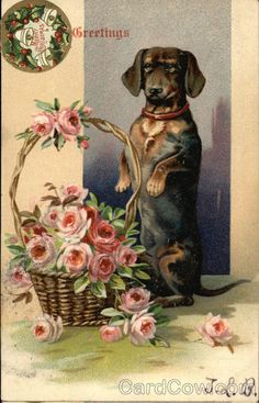 Dachshund and Basket of Flowers Dachshunds
