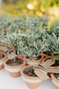 eco wedding favors olive trees