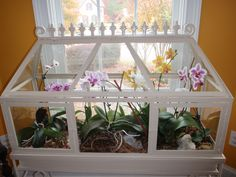 My orchid terrarium. So pretty when all the flowers are in bloom.