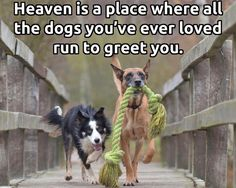 I'm counting on that!  Of course, the other fur and feather babies too.