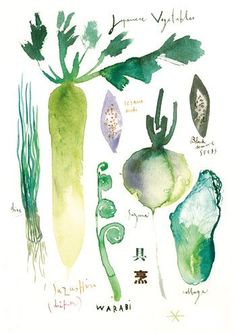 Lucile Prache - Japanese vegetables