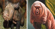<p>El planeta tierra tiene varios millones de años que fue creado, todo comenzó con una explosión que nos trajo hasta aquí con diferentes reacciones de la naturaleza, conocemos el proceso de evolución y como fue que los seres humanos llegamos a donde estamos, pero alguna vez se han preguntado ¿Cuántas especies de animales hubo en el planeta?, si no te lo haz preguntado es momento de que lo hagas, porque realmente son miles de especies las que hay en el planeta.</p>