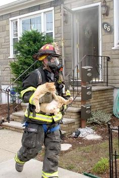 Firefighter rescuing a family's cat from a burning home. | Shared by LION