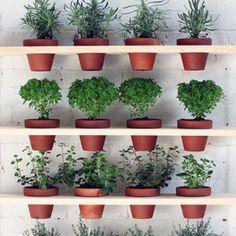 DIY Ein hängender Kräutergarten für's Wohnzimmer