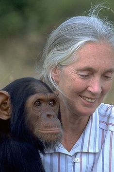 This Adorable Story From When Jane Goodall Was One Year Old Has an Important Lesson for Us All Jane Goodall, Sweet Stories, Cute Stories, Les Sentiments, One Year Old, Zoology, Primates, Animal Rights, Just For Fun