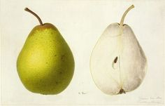Traditional seed packaging. Pear imagery. Resource bank for City Seeds.